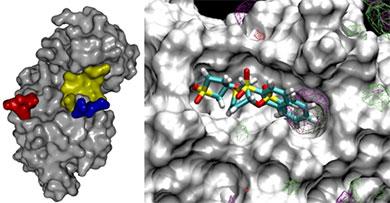 MAP kinase proteins